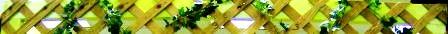 SAM'S CARIBBEAN Online Store – Buy Caribbean Food, Reggae CDs, Soca CDs, DVDs
